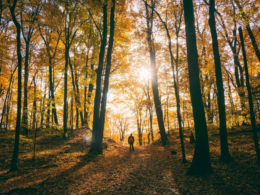 terugval voorkomen | Man wandelt in bos